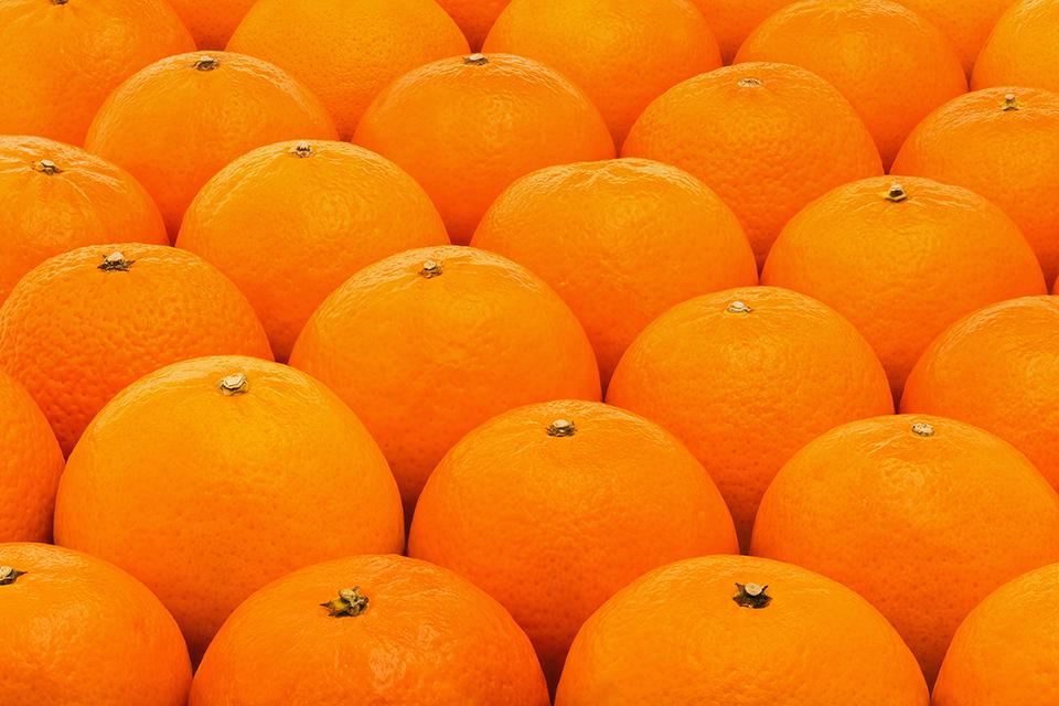 Citros: Oferta de laranja deve seguir elevada em fevereiro