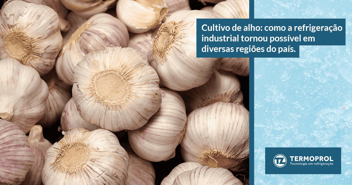 Cultivo de alho: como a refrigeração industrial tornou possível em diversas regiões do país