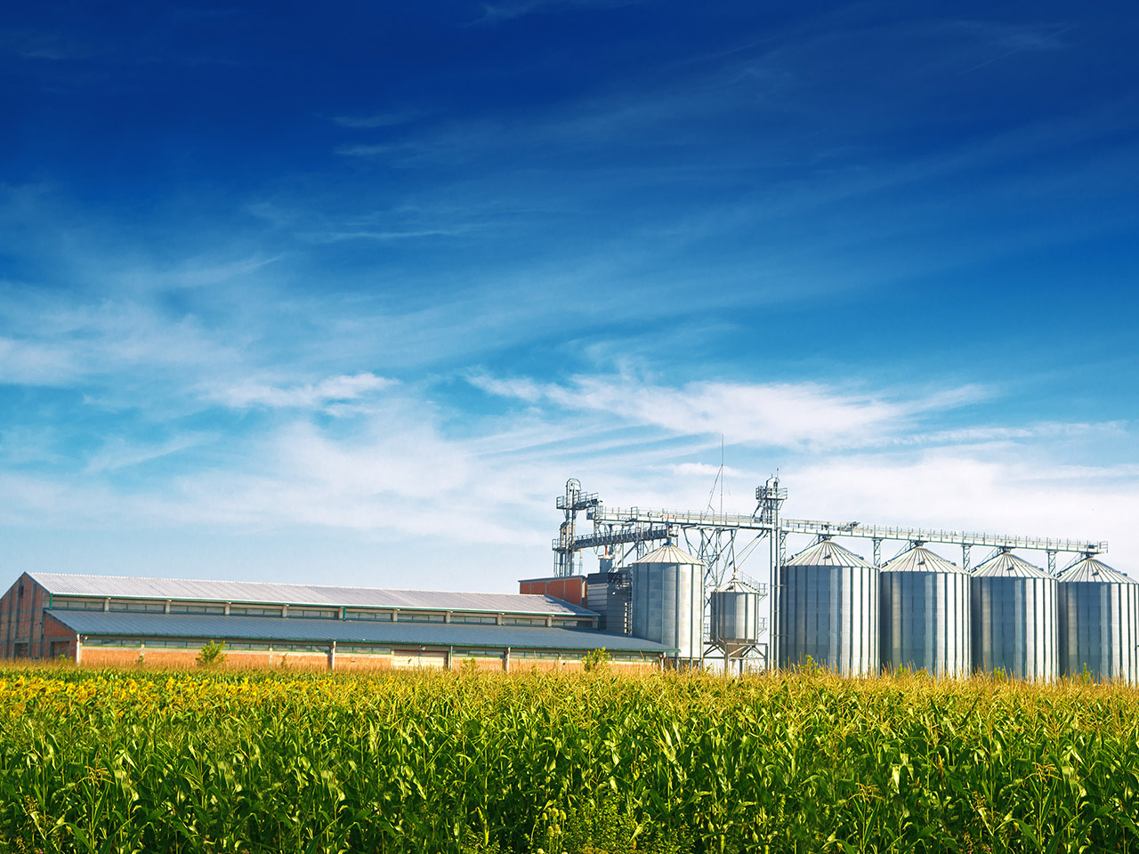 Dicas para o armazenamento de grãos