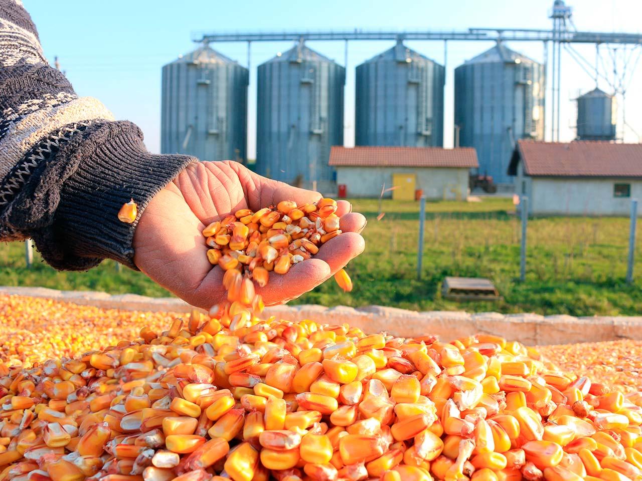 Brasil prevê nova safra recorde de grãos